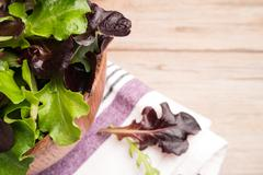 Fresh spring salad Stock Photos