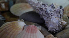 Sea Stones and Oyster Shells Stock Footage