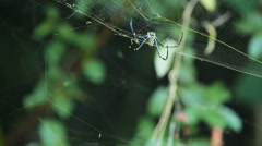 big spider on web - stock footage
