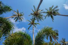 Coconut palms on the background of blue sky - stock photo