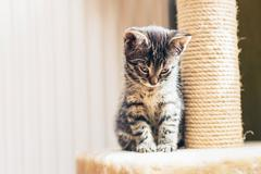 Adorable pensive baby tabby kitten Stock Photos