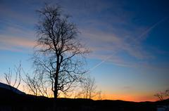Lone tree in front of colorful dawn sky Stock Photos