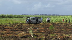 Barbados people working on sugar plantation in caribbean Stock Footage