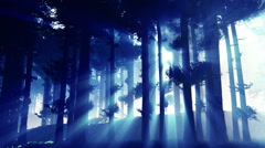 Mysterious Deep Pine Forest with Lightrays v2 3 Stock Footage