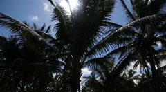 Coconut palm trees plantation in Philippines Arkistovideo
