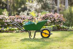 Green wheelbarrow in a garden on a sunny day Stock Photos