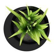 top view of houseplant in black vase isolated on white background - stock illustration