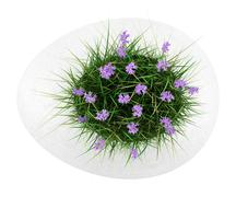 Top view of flowers with grass in concrete pot isolated on white background Stock Illustration