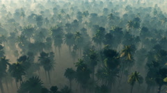 Morning fog in dense tropical rainforest. aerial Stock Footage