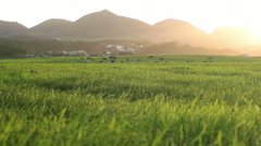 Low Angled Shot of Farmfield Stock Footage