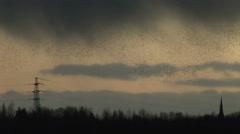 Evening light as starling murmuration rainy weather Stock Footage