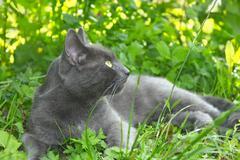 Gray cat lying on green grass - stock photo