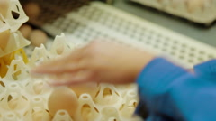 Sorting process eggs in a chicken farm Stock Footage