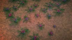 colony of fungi - stock footage