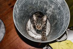 Stock Photo of Young tabby cat sitting in empty garbage bin. High angle view.