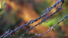Close up view of barbed wire fence track focus to tree trunk Stock Footage