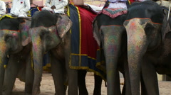 Four elephants with drivers wait in line Stock Footage