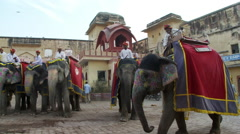 Elephants with drivers one passes in front of others Stock Footage