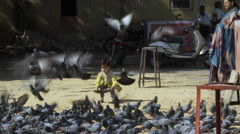 Small child feeds pigeons and they fly into the air Stock Footage