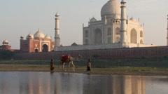 Taj Mahal and Camel reflection Stock Footage
