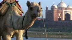 Camel walking past Taj Mahal Stock Footage
