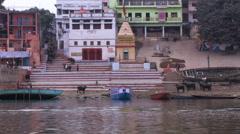 Cattle in Varanasi Stock Footage