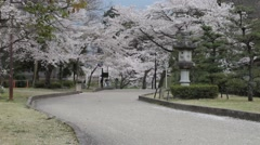 Sakura in Japan with nice background color Stock Footage