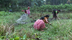 Women cultivating ground and digging and irrigating - stock footage