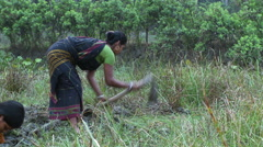 Indian woman tilling a wet field by hand. - stock footage