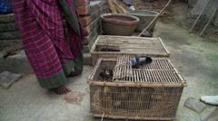Women with ducklings in baskets in India Stock Footage