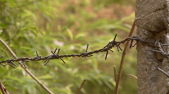 Barbed wire fence by green grass Stock Footage