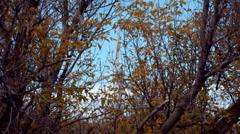 Large wind turbine seen through autumn trees. Stock Footage