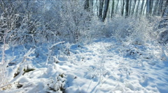 Snowy branches in forest. Beautiful day in forest at wintertime. Moving camera 3 Stock Footage
