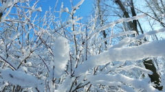 Snowy branches in forest. Beautiful day in forest at wintertime. Moving camera 5 Stock Footage
