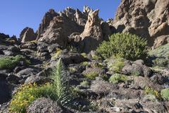 Roques de Garcia volcanic landscape with vegetation Teide National Park UNESCO - stock photo