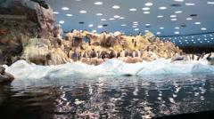 King penguins in Penguin Planet penguinarium in Loro Parque, Tenerife, Spain Stock Footage