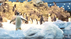 Real snow, iceberg and cold sea water for king penguins - stock footage