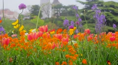 Flowers in Botanic Garden Stock Footage