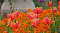Close-Up of Flowers in Botanic Garden Stock Footage