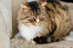 Cat waits for master outdoor - stock photo