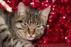 Christmas kitten with red christmas light decoration Stock Photos