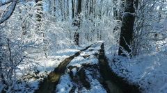 Snowy branches in forest. Beautiful day in forest at wintertime 8 Stock Footage