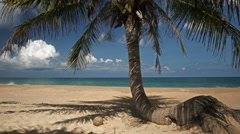 Coconut Tree on Tropical Beach Timelapse - stock footage