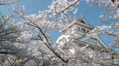 Blossoming cherry trees in an ornamental garden, pastel colors with dreamy fe Stock Footage