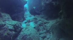 Scuba Diving With Ocean Wildlife - stock footage