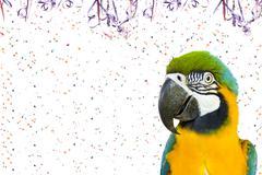 Pet Carnival - Brazilian Macaw - stock photo