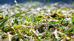 Time laps of morning sun melts a frozen grass Stock Footage