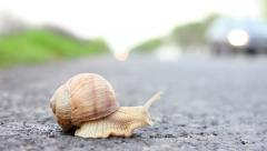 Snail trying to cross a road Stock Footage