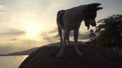 A Spotty Dog Standing on a Stone Against the Seascape with Tongue Sticking out - stock footage