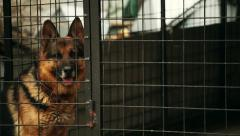 German shepherd dog is sitting in a cage Stock Footage